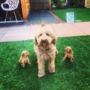 kunstgras geschikt voor honden